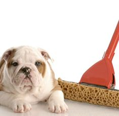 Is it possible to keep a clean house with pets?