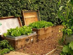 Urban Gardens  Taylor--this is what we need to do with the antique trunks we picked up last summer!