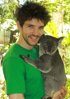 Colin Morgan and Koala most adorable.