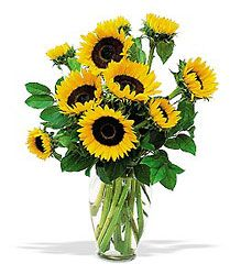 Mayfield's Sunbright bouquet is the perfect gift for someone in the hospital or someone who doesn't feel good in general. It's also great for Sunflower lovers. These long lasting flowers are so bright and cheerful that you can't help but smile when you look at them!