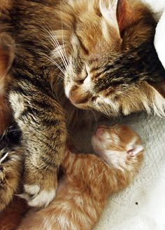cute baby kitten and mother cat