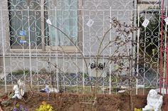 ガーデニング初心者さん必見! 初めての本格的な「バラの花壇」づくり[完全保存版] | GardenStory (ガーデンストーリー) Ladder Decor, Outdoor Structures, Garden, Roses, Products, Garten, Pink, Lawn And Garden, Rose