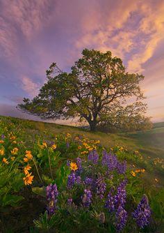 landscape photography19