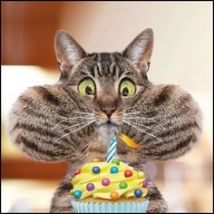 Funny Cat Birthday Card Blowing Out The Candle Pet Humour Greeting