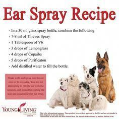 Young Living Essential Oil Animal Desk Reference Canine or Dog Ear Spray Recipe. Essential Oils Dogs, Doterra Essential Oils, Young Living Essential Oils, Yl Oils, Young Living Pets, Thieves Spray, Dogs Ears Infection, Oils For Dogs, Animals
