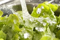 """Should you wash all fresh fruits and veggies before eating them? Even the organic ones? And what about that bag of """"prewashed"""" lettuce from the supermarket — should you wash that, too?  --- Some great info here!"""