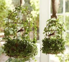 Live Ivy Bird Cage.