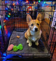 Decorate your Corgi's crate for Christmas! Make them feel included!