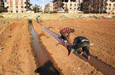 Em guerra, Síria aposta em hortas urbanas para conseguir alimentar populaç