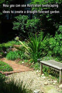 How you can use Australian landscaping ideas to create a drought-tolerant garden Architectural Plants, Drought Tolerant Garden, Kangaroo Paw, Australian Garden, Low Maintenance Garden, Organic Farming, Landscaping Plants, Water Garden, Better Homes And Gardens