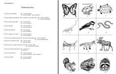 Here's a dichotomous key activity on animals.