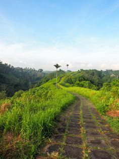 The Campuhan Ridge walk is one of our favourite things to do in Ubud. Check out our photo guide to get there...the first time you might need this :)