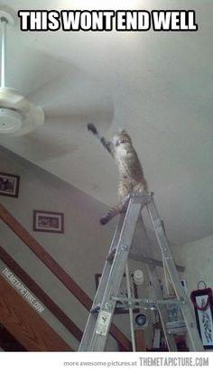 Ah, cats.
