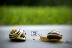 snail home for sale!