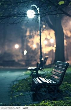 Bench in the park photography. Park Photography, Photography Gallery, Night Photography, Travel Photography, Rainy Night, Night Night, Street Lamp, City Lights, Street Photography