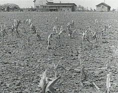 what caused the dust bowl essay outline For example, students writing about the dust bowl will teach their audience facts  such as dates, causes and impact another type of essay is the persuasive.