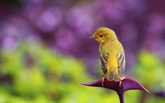 Lonely+Yellow+Bird+HD+Wallpaper.jpg