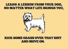 Learn an Important Lesson from your Dog