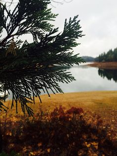 Road trip across California - 2014 walk around town called Paradise and a lake nearby. #roadtrip #chico #slovaktraveler #nature #californianature #autumn #pinetree #lake #raindrop