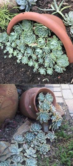 20 Ideas for Creating Amazing Garden Succulent Landscapes - Diy Garden Projects Plants, Garden Decor, Succulent Garden Landscape, Design Succulents, Succulents, Succulent Landscaping, Diy Garden, Garden Design, Garden Projects