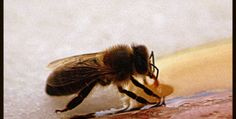 How to save a tired bee