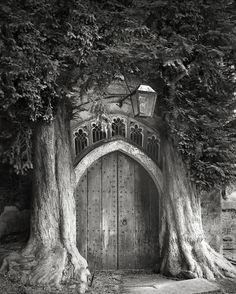 Árvores Ancestrais (6)