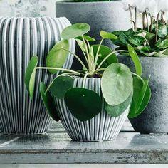 Gröna växter - inspirerande bilder | Blomsterlandet.se