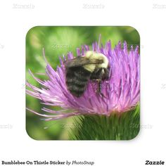 Bumblebee On Thistle Sticker