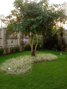TERRA PRETA = Paisagismo+Projetos+Manutenção de Jardins: Projeto e execução: jardim residencial (Imbituba/SC)