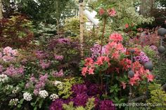 Hillier won their Gold Medal at the 2015 RHS Chelsea Flower Show, here's a small section of their beautiful exhibit at Chelsea. Chelsea Flower Show, Slug, Exhibit, Garden Plants, Garden Design, Yard, Shades, Colour, Flowers
