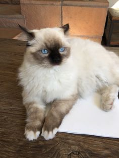 Baby Matilda, seal mitted. 6 months old