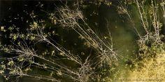 Greg Dunn Design | Visual Art | Neuroscience Art | Gold Leaf Painting