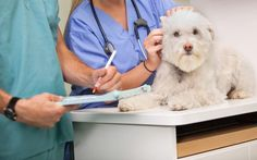 Planos de saúde para animais de estimação