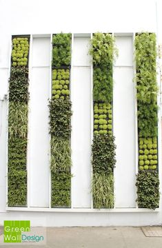 i like the cleanliness and different shades. very palm springsy to me? #verticalfarming