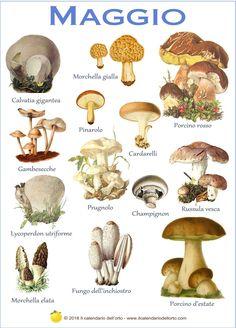 Il calendario dei funghi commestibili più comuni in Italia Poisonous Mushrooms, Garden Mushrooms, Edible Mushrooms, Growing Mushrooms, Stuffed Mushrooms, Truffle Mushroom, Mushroom Art, Mushroom Fungi, Lemon Skin Lightener