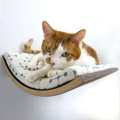 The Curve is a bed designed and made for your pet. Its slim design and aesthetically pleasing shape make it seamlessly fit on any wall in any home.