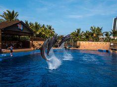 uShaka Marine World, Durban, KwaZulu-Natal, South Africa Switzerland Tourism, City By The Sea, Kwazulu Natal, Travel Brochure, Exotic Places, Travel Information, Africa Travel, Adventure Travel, South Africa