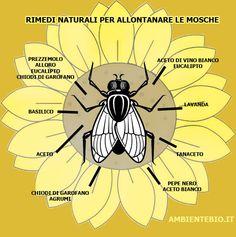 Rimedi naturali contro gli scarafaggi rimedi naturali e for Rimedi naturali contro le formiche bicarbonato