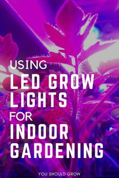 Indoor Vegetable Gardening LED grow lights are our number one choice for indoor gardening. Learn about LED lights before you buy and get tips for growing food indoors. Indoor Vegetable Gardening, Home Vegetable Garden, Hydroponic Gardening, Container Gardening, Organic Gardening, Greenhouse Farming, Sustainable Gardening, Tomato Garden, Greenhouse Gardening