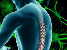 Potential New Cell Source for Spinal Cord Injury Treatments