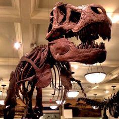 Tyrannosaurus - @jeffreynyc