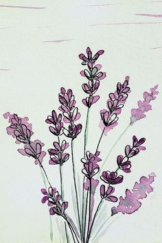 Watercolor Flowers Discover Lavender Illustration This loose style illustration of lavender is part of an alphabet style study in watercolor and ink. Letter L and Lavender. Art And Illustration, Watercolor Illustration, Floral Illustrations, Art Sketches, Art Drawings, Flower Sketches, Arte Sketchbook, Watercolor And Ink, Watercolor Design