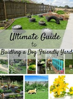 Tips for building a dog-friendly garden, stop your dog from digging out your flower beds and building a sensory garden.