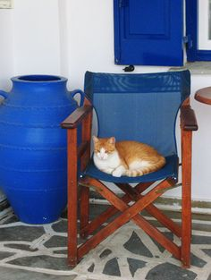 Living the good life in Naxos, Greece =) Naxos Greece, Cat Scottish Fold, Greek Islands, Life Is Good, Cats, Pictures, Animals, Beautiful, Greece
