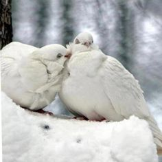 See how that pair of billing doves With open murmurs own their loves And, heedless of censorious eyes, Pursue their unpolluted joys: No fears of future want molest The downy quiet of their nest. Lady Mary Wortley Montagu