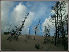moving dunes by MrsEfi on DeviantArt