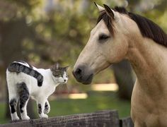 Google Image Result for http://www.newyorkanimals.org/horse_cat_39482-bigthumbnail.jpg