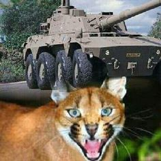 Battle Rifle, Defence Force, Armored Fighting Vehicle, War Machine, Military Vehicles, South Africa, African, Apartheid, Animals