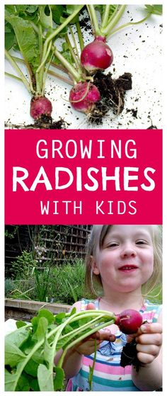 Growing radishes with kids | summer activities for kids | gardening | vegetables