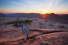 landscape photograph of a stunted tree atop a granite koppie in quiver tree valley in the richtersveld national park Namib Desert, Travel Planner, Nature Reserve, Africa Travel, Landscape Photographers, Beautiful Landscapes, Travel Pictures, South Africa, Tourism